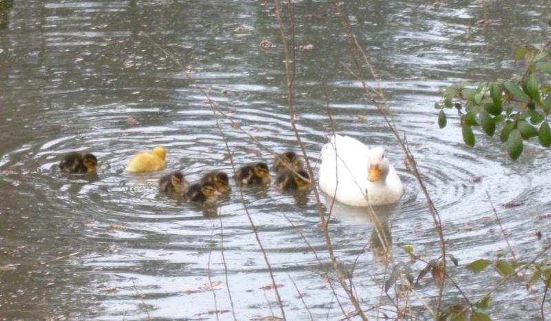 Comune di castel san pietro terme oltre 120 uccelli for Animali laghetto